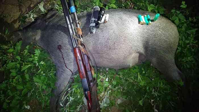 Остались без оружия и внедорожника: в Крыму поймали браконьеров, убивших кабана